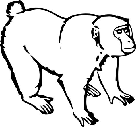 monkey coloring pages online monkey coloring pages 2 coloring pages to print