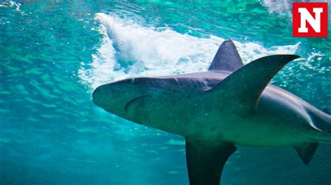 video of shark dragged behind boat viral video of shark being dragged behind a boat lands