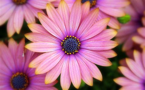 tumblr flower backgrounds wallpapers freecreatives