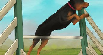 rottweiler knee problems the best ways to heal a torn acl without surgery wikihow