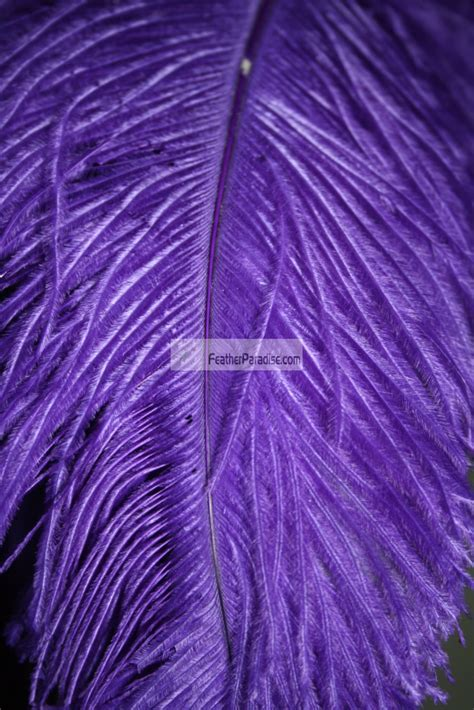 Purple LARGE Ostrich Feathers wings Wholesale/Retail 22 24