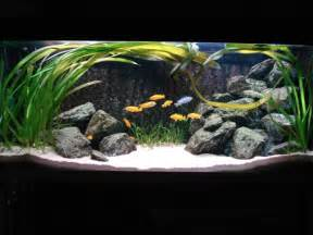 malawi cichlid tank at the shanghai aquarium paludariums