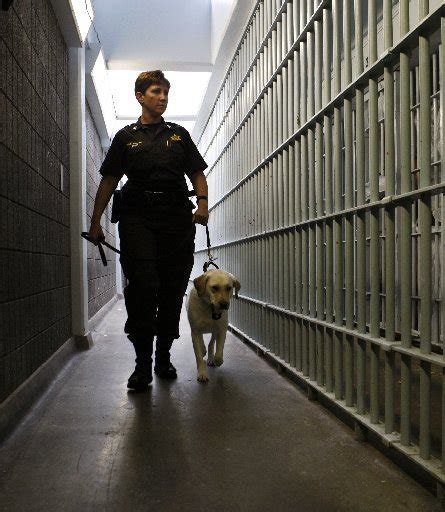 prison dogs detection dogs archives meshdetect 174