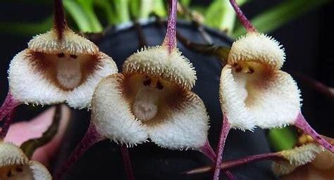 imagenes de flores asombrosas asombrosas flores con formas de animales canal clima