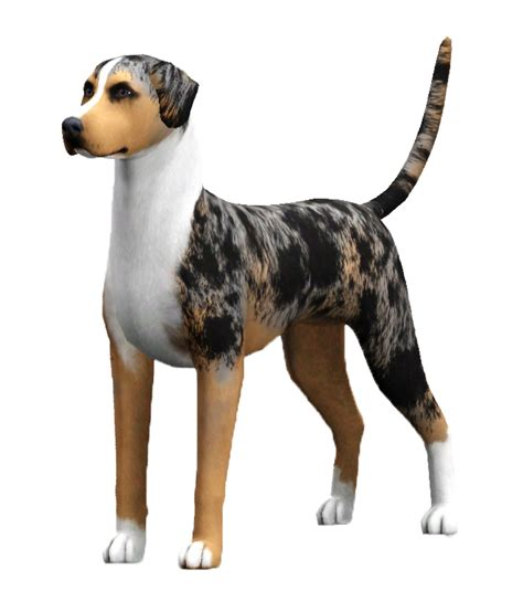 ukc dogs american leopard hound sims united kennel club