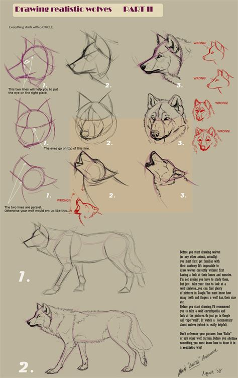 Drawing Guide Guides To Drawing Wolves