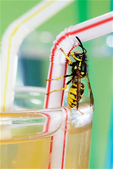 Tisch Polieren Hausmittel by Die Besten Hausmittel Gegen Wespen