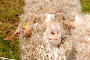 schafwolle im garten schafwolle gegen schnecken im garten haare als