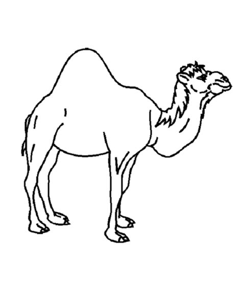 camel template coloring home