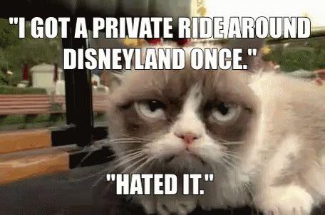 Cat Meme Gif - grumpycat memes gif grumpycat memes disney gifs say