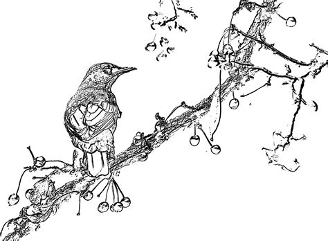 turn photos into coloring book pages turn photos into coloring pages artsybarksy