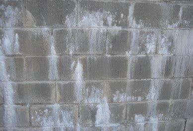 white mold on concrete wall white mold vs efflorescence differences dangers