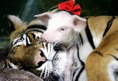 imagenes animales relacionandose los animales tienen la palabra