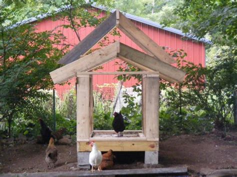 duck house backyard chickens community