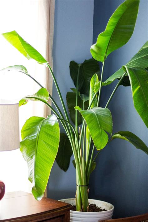 easy plants to grow inside best 25 easy house plants ideas on pinterest plants