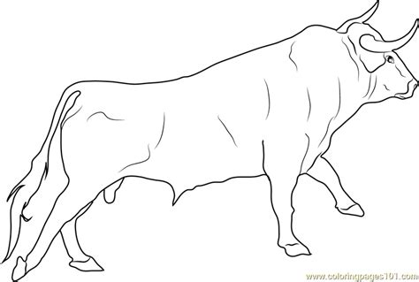 bull coloring bull printable coloring pages