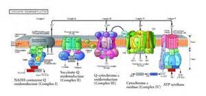 reconstruction of sugar metabolic pathways of giardia