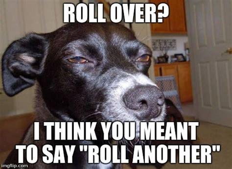 Stoned Dog Meme - stoned dog imgflip