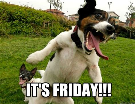 Dog Friday Meme - it s friday insane dog quickmeme