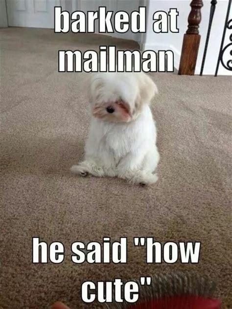 Doggy Meme - mailman on funnyand com