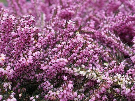 giardino d inverno fai da te 5 piante fiorite per il giardino d inverno one giardinaggio
