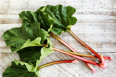 Rhubarb 101   The Pioneer Woman