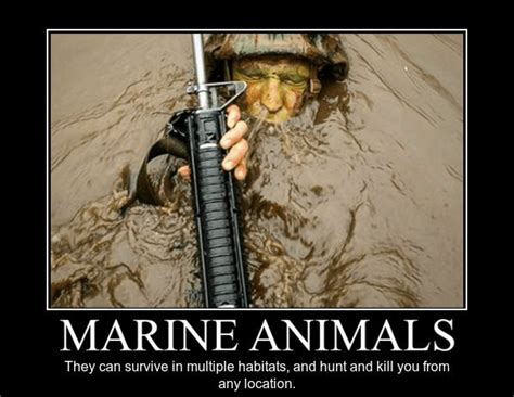 Funny Marine Memes - 1000 ideas about marine memes on pinterest military
