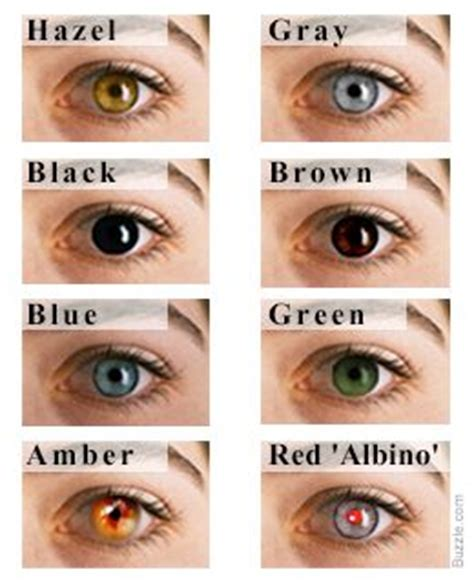 types of eye colors eye color chart interesting facts about the different