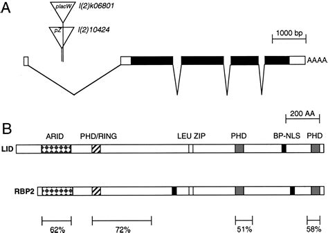 primer design reading frame a screen for new trithorax group genes identified little
