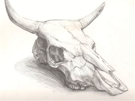1000 images about cattle skull tattoo on pinterest