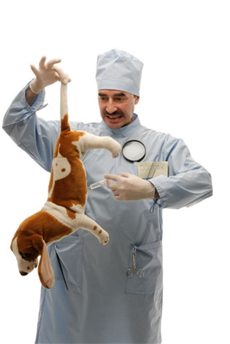 how much are vaccinations for puppies roger biduk vaccinations and vets are killing our pets