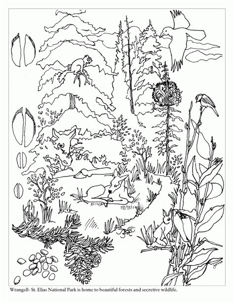 el ecosistema colouring pages free coloring pages of taiga biome taiga animals coloring