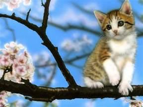 baby kitten wallpapers wallpaper cave