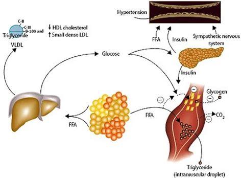 dieta sedere tessuto adiposo di fianchi glutei e cosce proteggono da