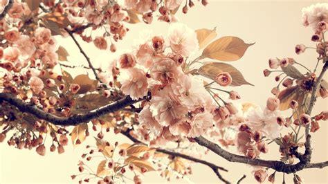 imagenes bonitas vintage fondos vintage flores para fondo de pantalla en hd 1 hd