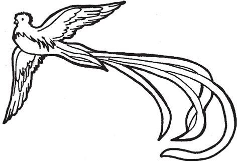 imagenes de quetzal a lapiz quetzal para pintar dibujos de quetzal