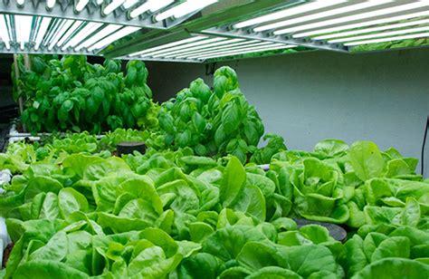 lada per piante indoor lade cfl per piante lade cfl per acquario lada uv per