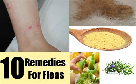 10 home remedies for fleas cure herbal