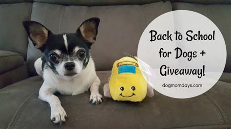 Dogs For Giveaway - back to school for dogs giveaway dog mom days