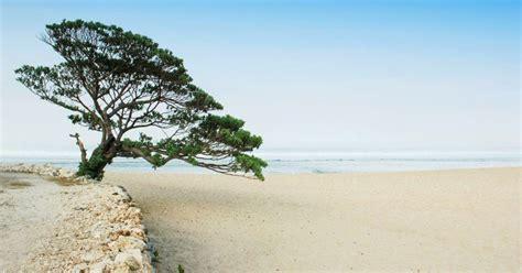 daftar pantai  jogja jogja beaches daftar wisata