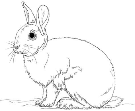volcano rabbit coloring page ausmalbild niedliches h 228 schen ausmalbilder kostenlos