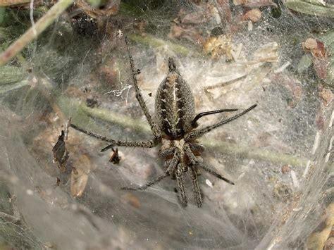 la gran teranyina l aranya de la gran teranyina fauna i flora