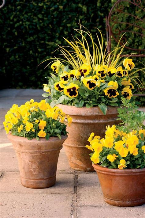 Pansy Garden Ideas Pansies Fall Containers And Fall Container Gardening On