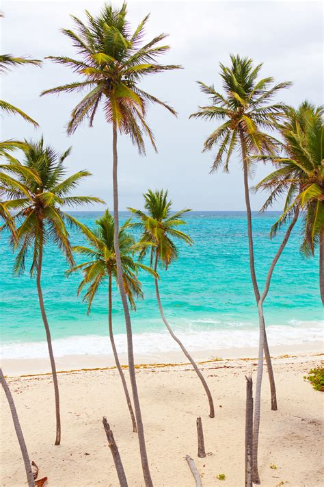tropical beach with palm trees free stock photo public