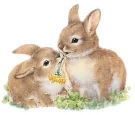 hase le zwergwidder kaninchen nhd 23 tipps f 252 r d