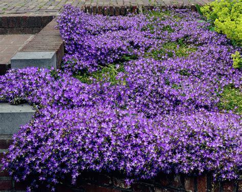 plant list perennial