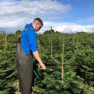 work during the year kildare christmas trees