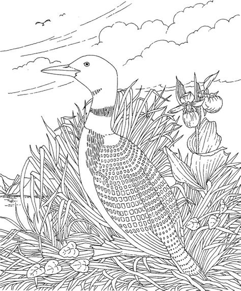 printable coloring pageminnesota state bird
