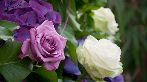 Weiß Blühende Blumen 789 by Die 73 Besten Blaue Hintergrundbilder