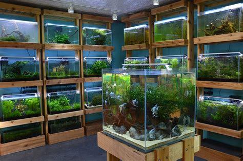 aquarium design store aquarium zen seattle tropical fish store aquatic plants